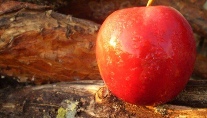 Top 5 rudens gardumi no āboliem