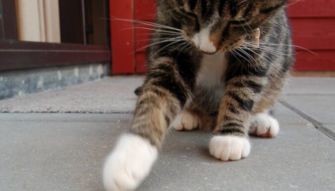 В Риге неизвестный вандал подстрелил кошку