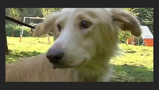 ЧП в Болдерае: найден хозяин привязанной к дереву собаки