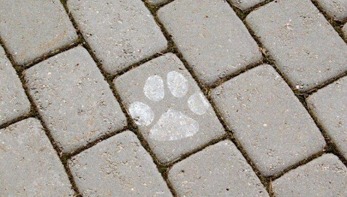 Женщина поскользнулась на нечищенном тротуаре и выронила из рук той-терьера; собака погибла