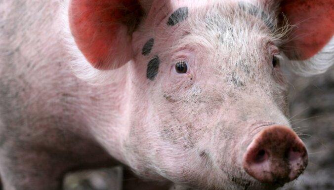 Латвия потребует у ЕК компенсаций из-за запрета на экспорт свиней в Россию