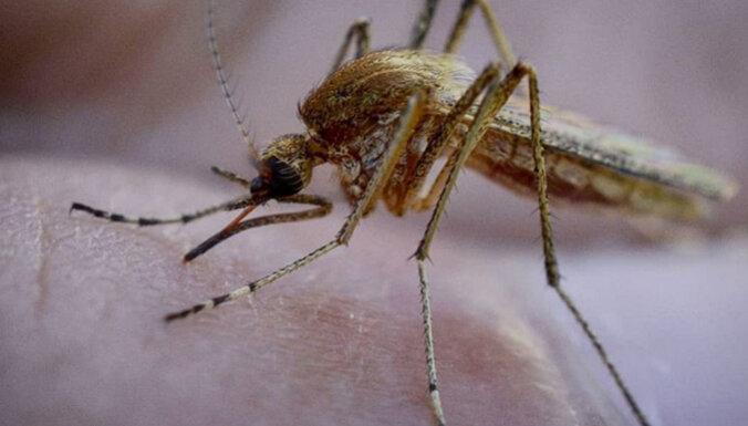 Sniegs ziemā, siltums un mitrums pavasarī veicinājis odu savairošanos