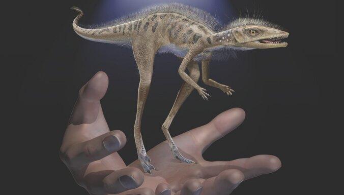 Gigantisko dinozauru priekšteči bija mazi, teju piemīlīgi plēsoņas