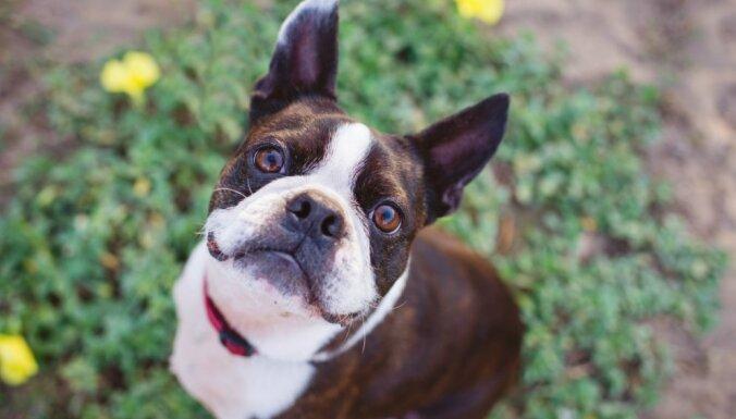 Клещевой энцефалит у собак - симптомы и лечение