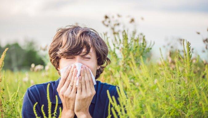 Svarīgākais par nejaukajām ikdienas pavadonēm alerģijām