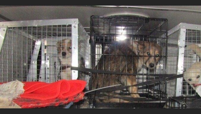 Через российско-латвийскую границу не пропустили 17 собак