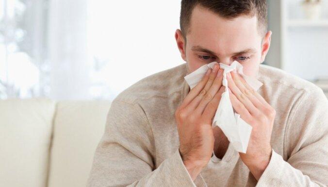 Семь мест, существ и вещей в доме, которые обостряют вашу аллергию