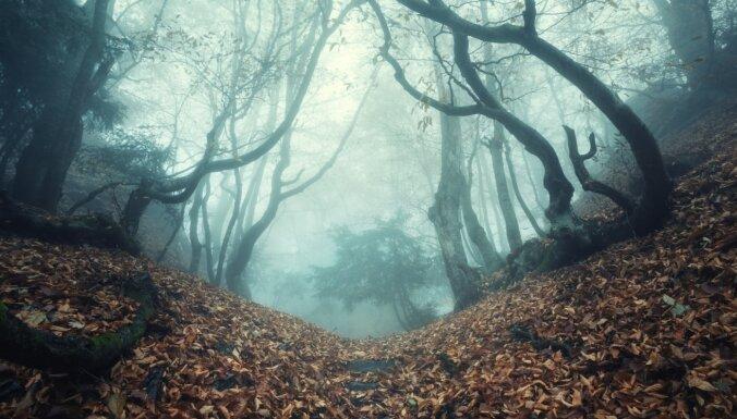 Baisām leģendām apvīti un vareni skaisti: vilinoši meži visā pasaulē
