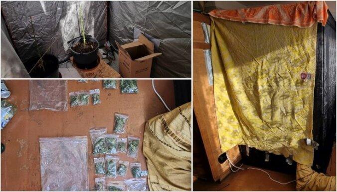 Foto: Policija kratīšanas laikā Talsu novadā uziet marihuānas audzētavu