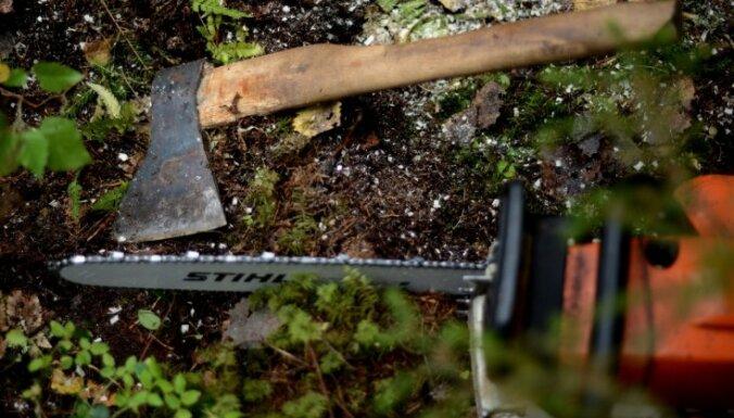 Polijā sāk koku izciršanu Belovežas gāršā