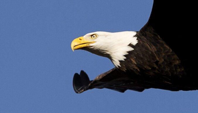 Белоголовый орлан врезался в самолет: четверо погибших