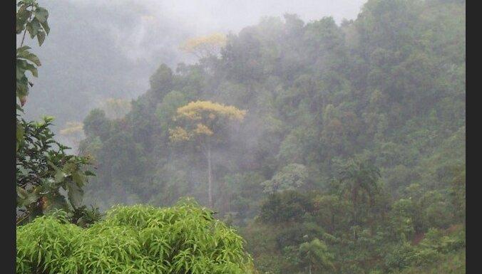 Видео о джунглях амазонки — photo 13