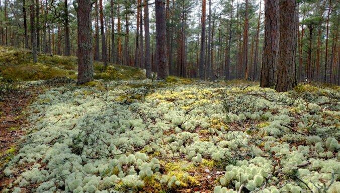 'Latvijas valsts meži' publiskojusi datus, kas skar valsts drošību; notiek situācijas izmeklēšana