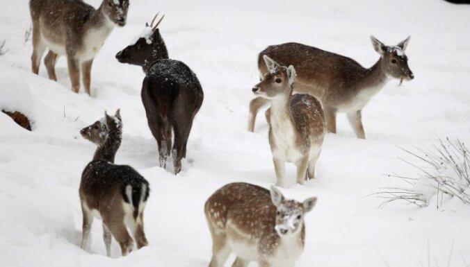 Поезда в Японии будут лаять и фыркать для отпугивания оленей