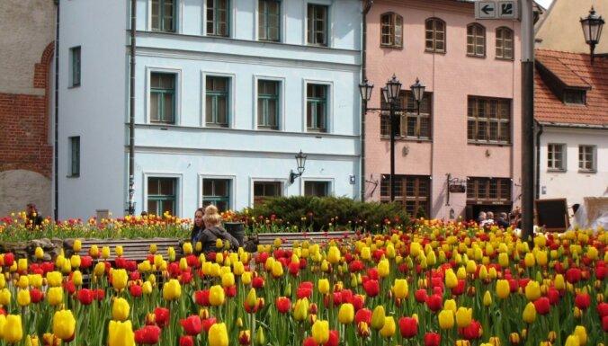 Foto: Rīgā zied desmitiem tūkstoši tulpju