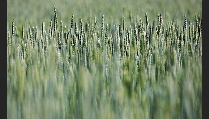 Nākamajā gadā subsīdijām zemniekiem plāno trīsreiz mazāk līdzekļu