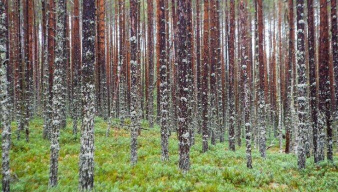 VUGD izglābj divus mežā apmaldījušos cilvēkus