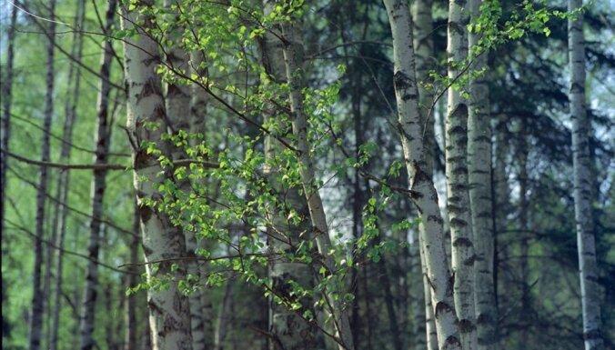 Jurģis Jansons: 'Fake news' un mazpatiesības par Latvijas mežu un mežsaimniecību – vai varam ko vērst par labu?