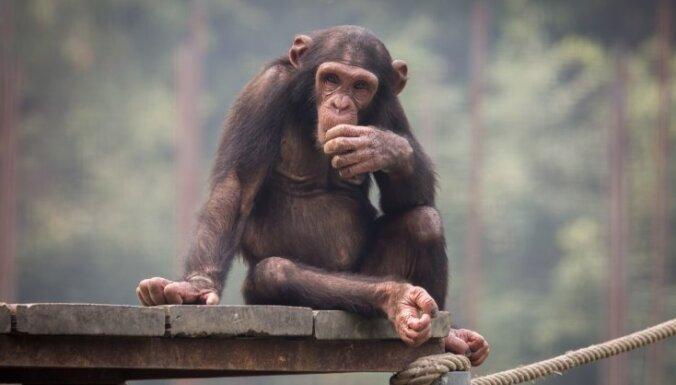 Ученые создали первые гибридные эмбрионы человека и обезьяны