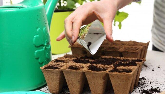 Vasaras daiļdārzam: kā pareizi izaudzēt dēstus viengadīgajām puķēm