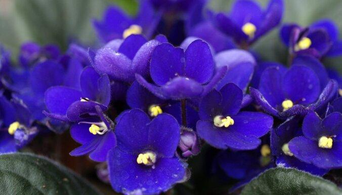 10 комнатных растений, безопасных для ваших домашних питомцев