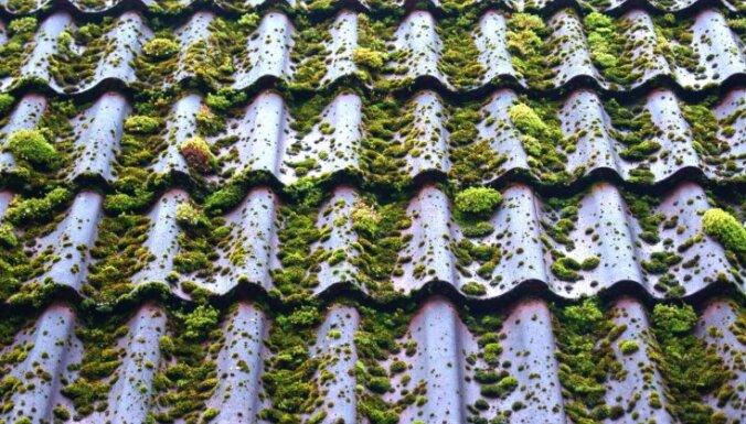 Vai sūnas var uzskatīt par problēmu – eksperts ieskicē jumtu ienaidniekus