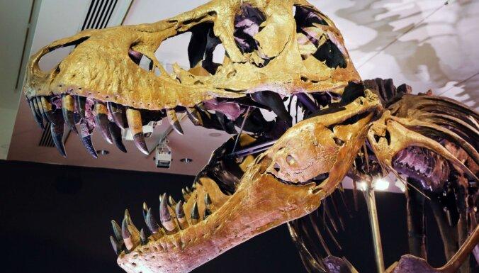 3D skenēšana atklāj, cik liels bija vēl neizšķīlies tiranozaurs
