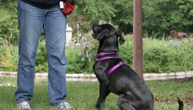 Zelta likums suņa audzināšanā – ievērot konsekvenci