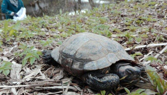 Iedzīvotāji Lielās talkas laikā atraduši pilnas alus pudeles un bruņurupuci
