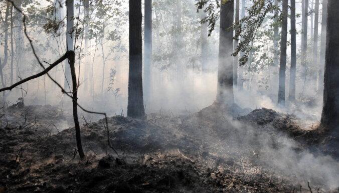 В понедельник выгорело 4,65 га леса