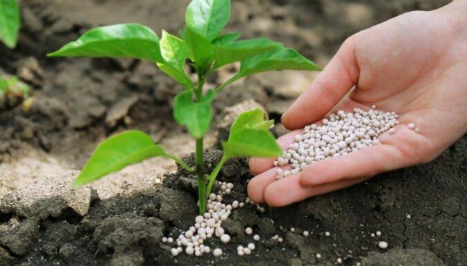 Домашняя аптечка: лекарства для растений