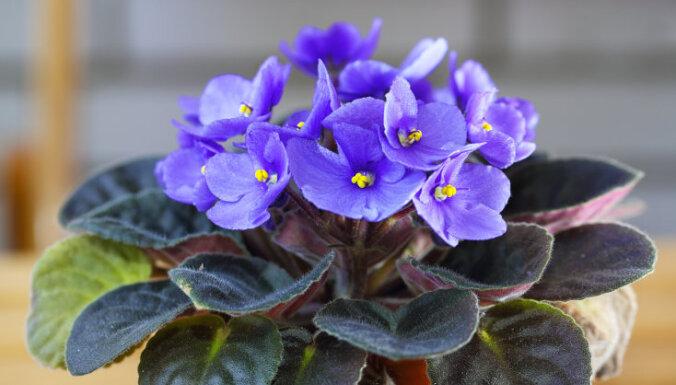 12 цветущих растений, которые добавят красок в ваш дом