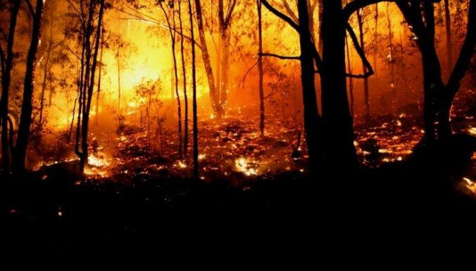 Krievijas FDD vaino 'Al Qaeda' mežu ugunsgrēku izraisīšanā Eiropā