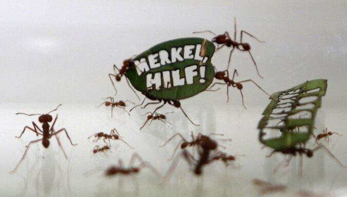 Полмиллиона муравьев обратились к Меркель за помощью