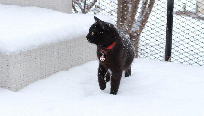 Valsts centrālajā daļā izveidojusies līdz 20 centimetriem bieza sniega sega