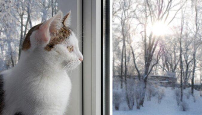 Latgalē līdz sestdienas rītam nepārtraukti snigs; citviet saglabāsies migla