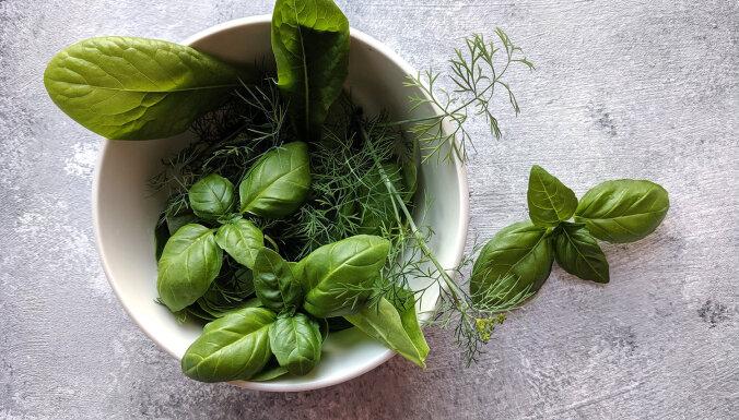 """В Музее природы пройдет выставка """"Лекарственные и пряные растения, а также другие нетрадиционные овощи"""""""