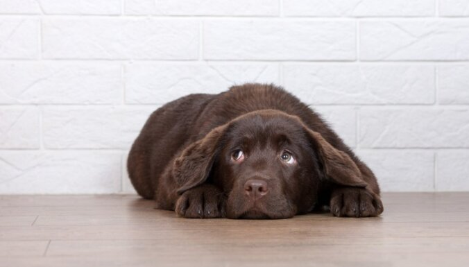ВИДЕО: В Англии родился щенок с шестью лапами
