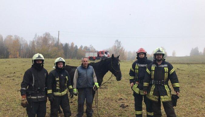 ВИДЕО. Спасатели успели вытащить провалившегося в болото коня