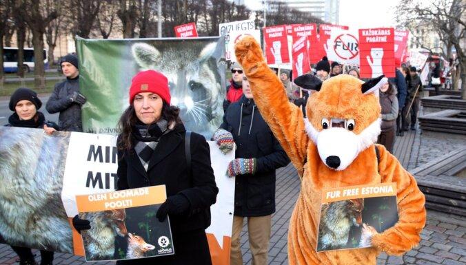 Vērienīgā gājienā pieprasa kažokzvēru audzēšanas aizliegumu Latvijā