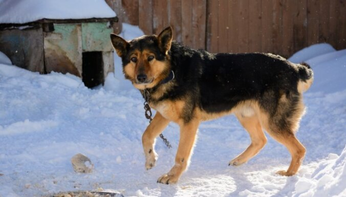 Suņa atstāšana pie ķēdes salā – cietsirdīga izturēšanās. Padomi mīluļa labturībai aukstumā