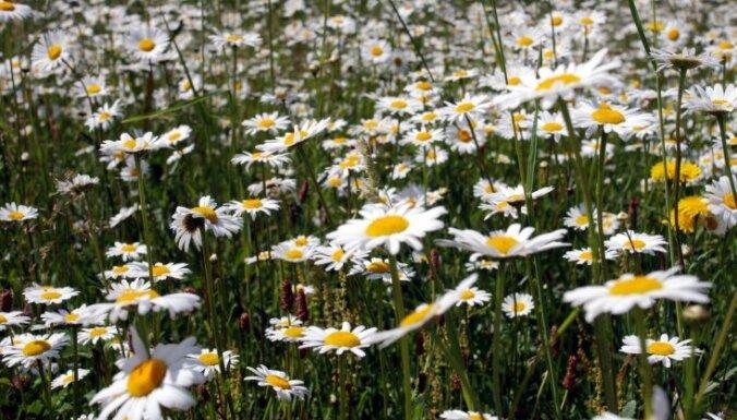 Rīgas apkaimju biedrības var piedalīties projektā, lai izveidotu pļavas