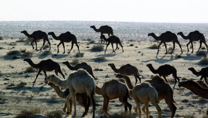 Uzbrucēji ar pilnpiedziņas automašīnām Irākas tuksnesī nolaupījuši Kataras mednieku grupu