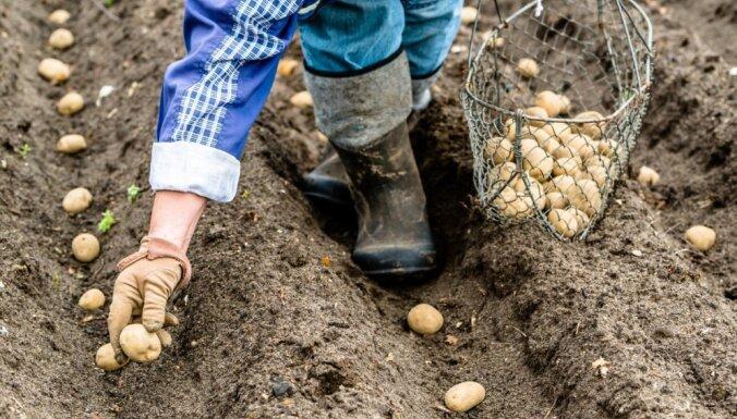 Mudina organizācijas palīdzēt trūcīgām ģimenēm iekopt savus mazdārziņus pārtikas audzēšanai