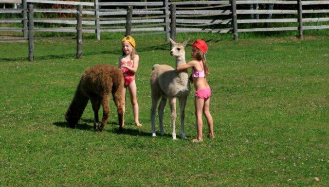 Lai bērni zinātu, kas ir govs – aicina skolēnus braukt ekskursijās uz lauku saimniecībām