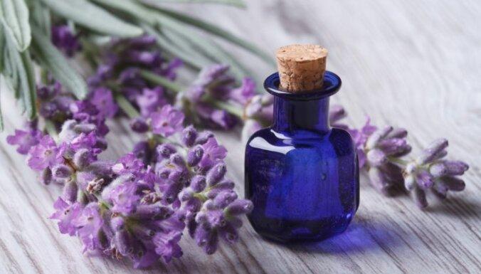 Эфирное масло лаванды: применение и полезные свойства