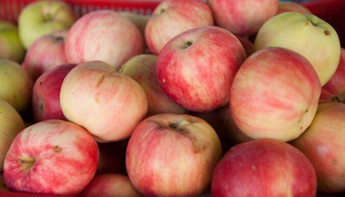 Pētījums: Viens ābols dienā var palīdzēt izvairīties no medikamentu lietošanas