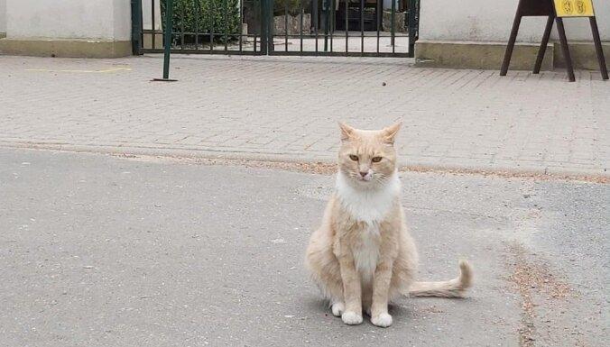 "Из Рижского зоопарка пропал ""кот-кассир"" Рудис"