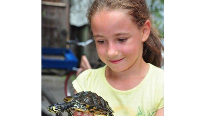 В Лиепае возле моря нашли двух бродячих черепах