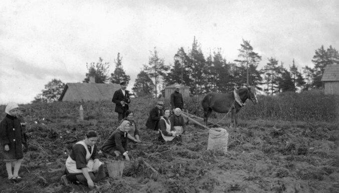 Архивные ФОТО: Как в Латвии раньше картошку собирали